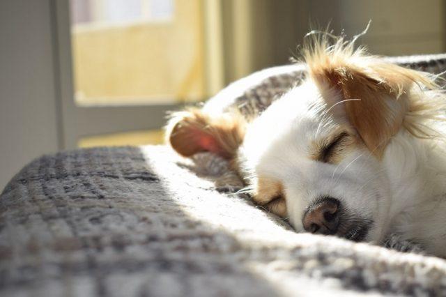 Gros plan sur les maladies transmises par les tiques aux chiens